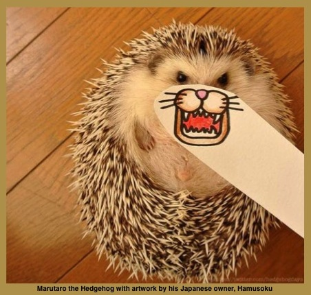 hedgehog4WP@@@